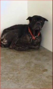 Please Help Leo Came In As A Stray With His Red Collar Yet No Came To Find Him Dog Wound Dogs Animals