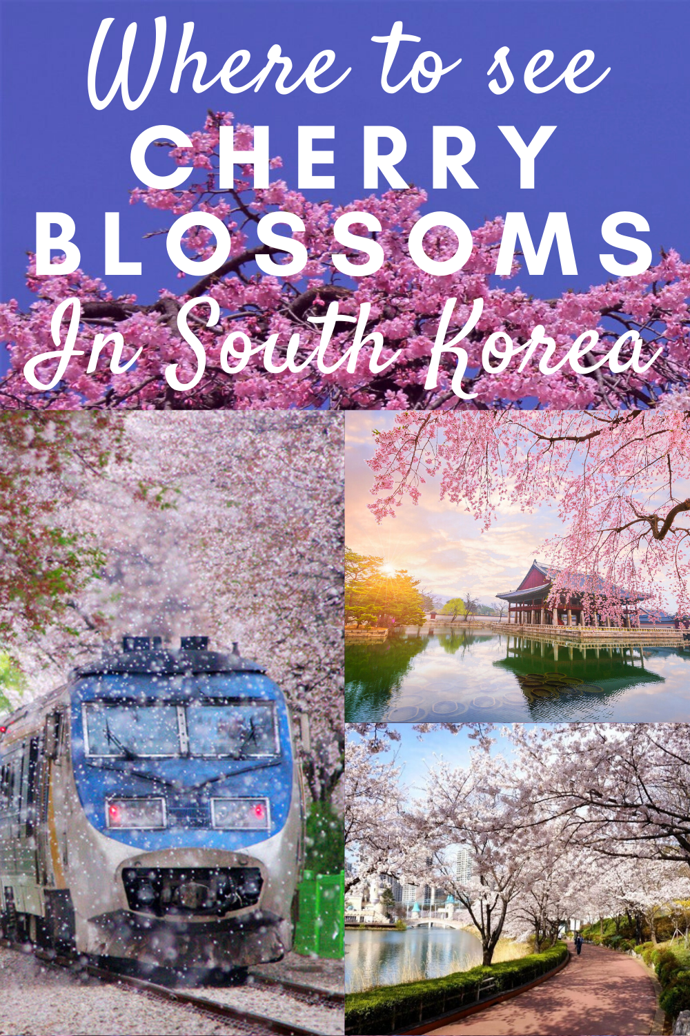 Where To See Cherry Blossoms In South Korea Korea Travel Seoul Korea Travel South Korea Travel