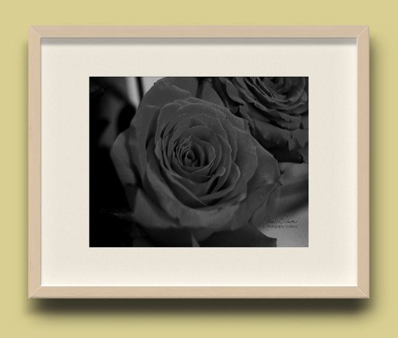 Rose prints rose photography floral photography black and white photography gift ideas