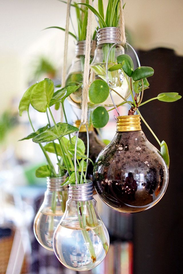 Hanging Light Bulb Planters Amp Vases Diy For Urban Jungle Bloggers In 2019 Diy Hanging