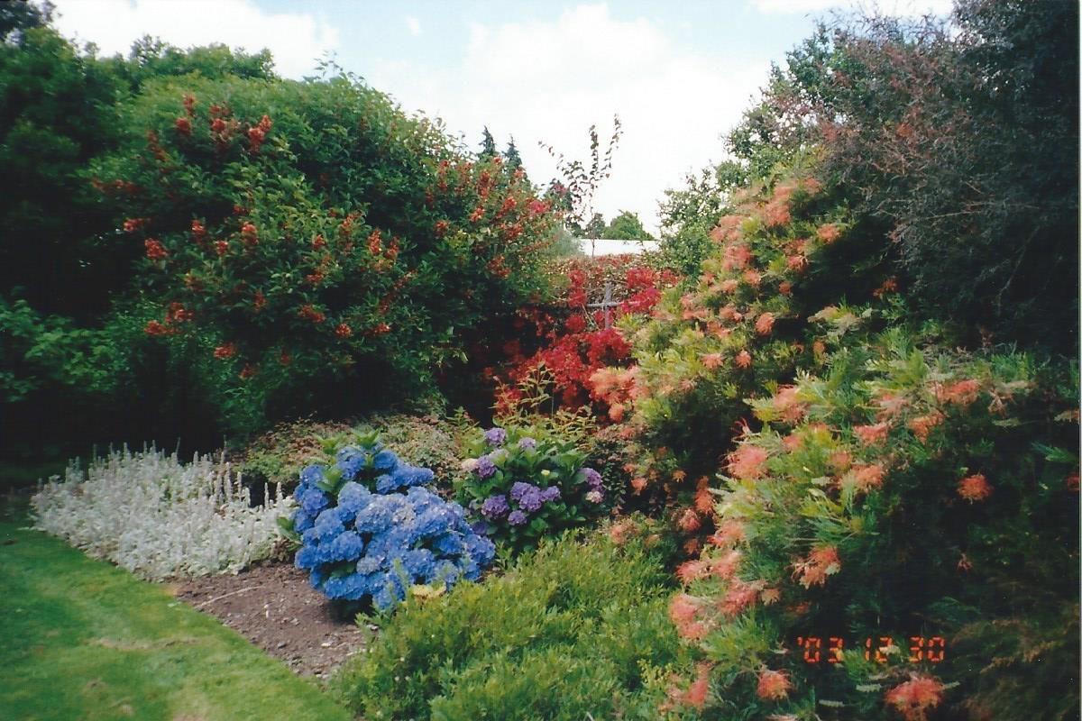 Auckland Bg Proteas Hydrangeas Etc Plants Hydrangea New Zealand