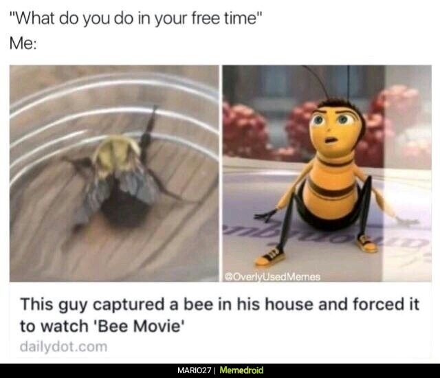 pinterest ssadie456 relatable humor bee movie