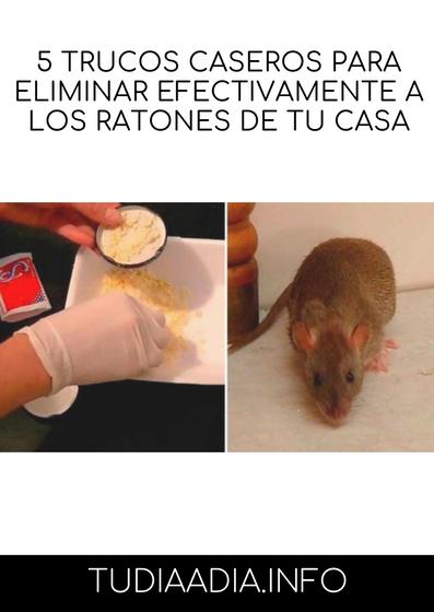 Como Acabar Con Las Ratas En El Campo 5 Trucos Caseros Para Eliminar Efectivamente A Los Ratones De Tu