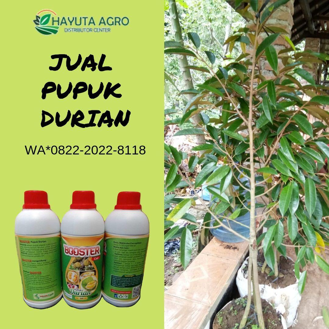 Wa O822 2o22 8ii8 Jual Pupuk Untuk Durian Di Musi Banyuasin Harga Pupuk Durian Di Prabumulih Pupuk Organik Buah Penjualan