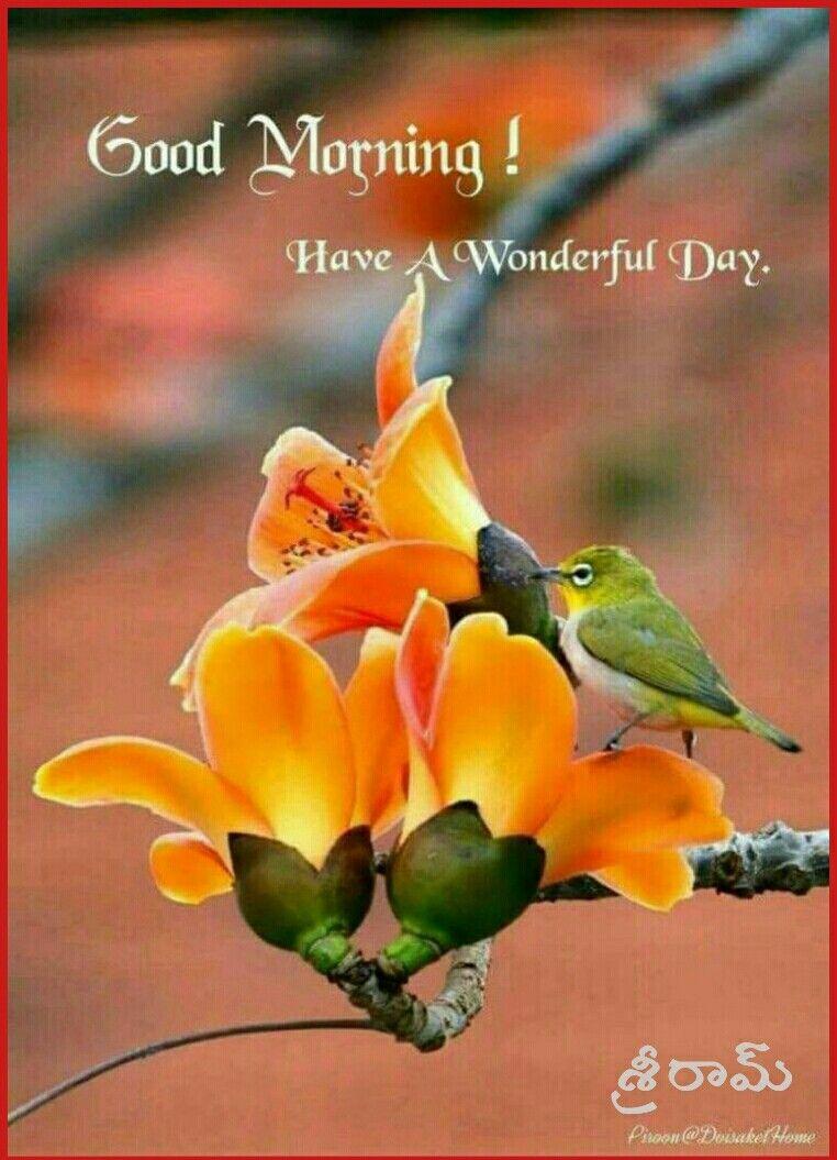 Good Morning Beautiful Birds Animals Beautiful Pet Birds
