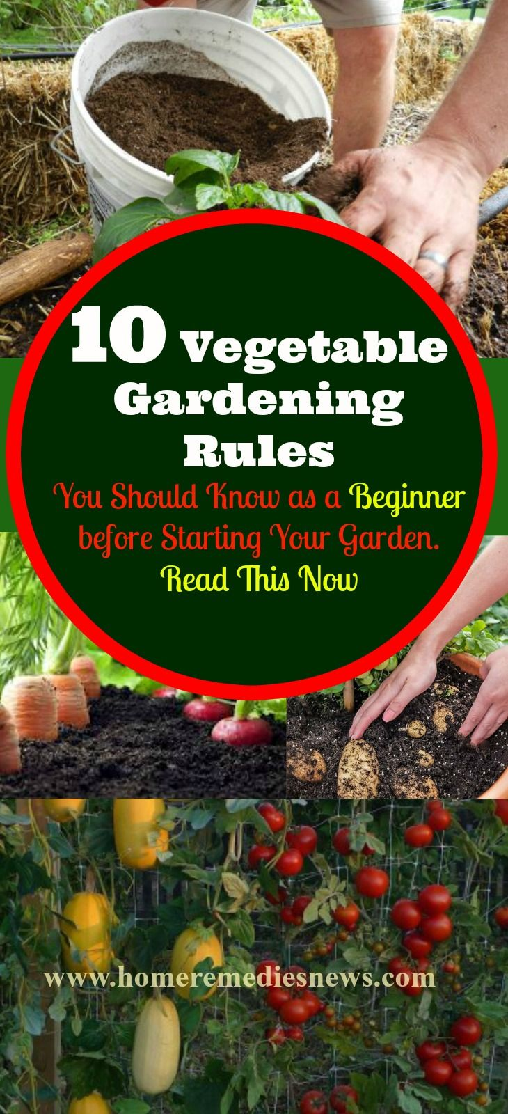 10 Easy Vegetable Gardening Tips You Should Know As A Beginner Before  Starting Your Own Garden