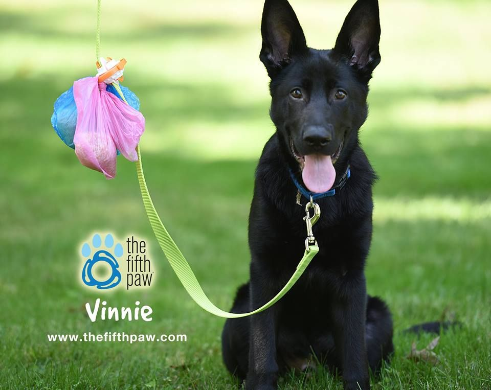 #TheFifthPaw is a cool #leash attachment that lets you be Hands Free, #Doody Free, while #walking your #dog! No more juggling full bags of #poop. Holds multiple #Poopbags. Stays Clean & Tangle free! #MadeintheUSA! #product #German Shepherd  #BlackGermanShepherd #dogproducts www.thefifthpaw.com