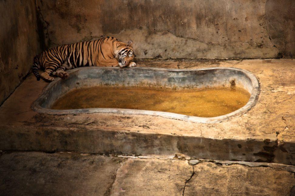 La souffrance des animaux de zoo capturée à travers le monde par le photographe Gaston Lacombe