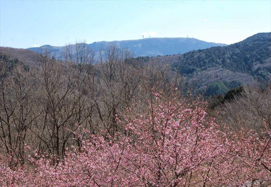 Kawatsu zakura and nature