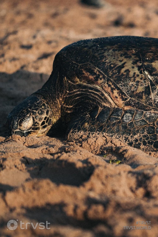 #trvst #oceanlove #ecoconscious #conservation #socialchange #savetheturtle #beinspired #amazingworld #gogreen #marinelife #collectiveaction   📷 @jakobowens1 on unSplash