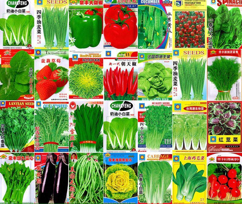Vegetable Seeds Garden Heirloom China Original Large Colorful