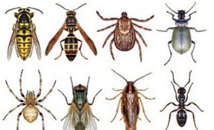 25641f0301659f3ce97ff755b6135b45 - How To Get A Pest Control License In Georgia