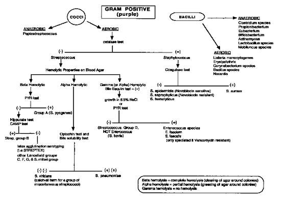 Gram positive flow chart bac pinterest gram positive flow chart ccuart Images
