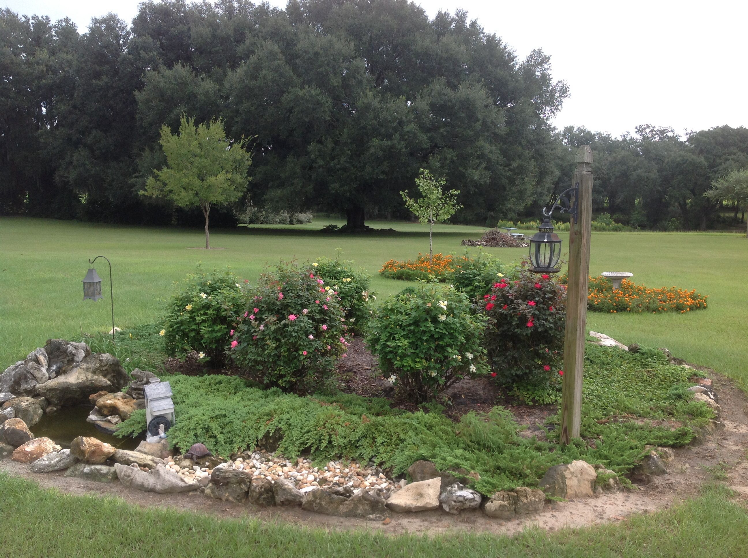 rose garden over septic tank