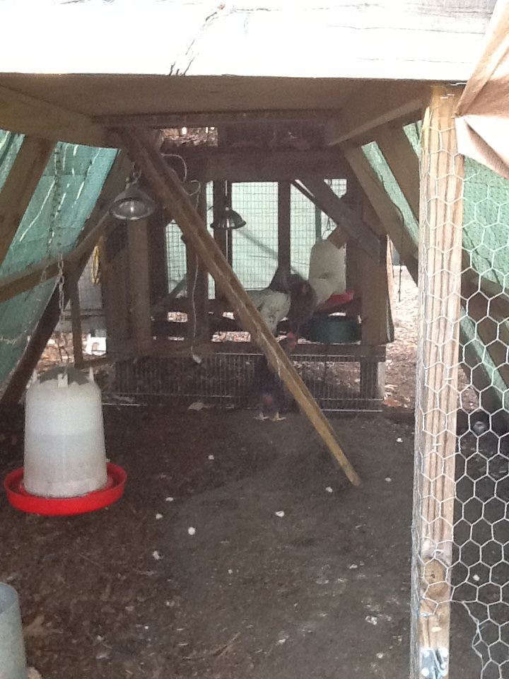 Inside of our chicken coop. Recreated out of my daughter's Swing Set.