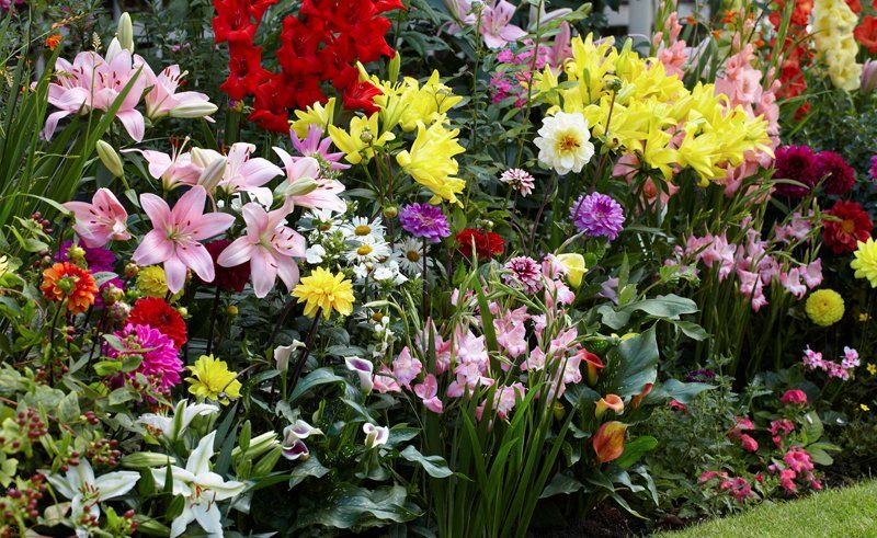 Lilie W Ogrodzie Jak Sadzic Uprawiac I Pielegnowac Lily Plants Calla Lily Lily Garden