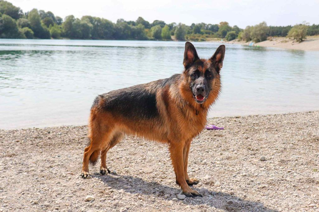 Am Hundesee Bei Munchen Hunde Cesar Milan Hundchen Training