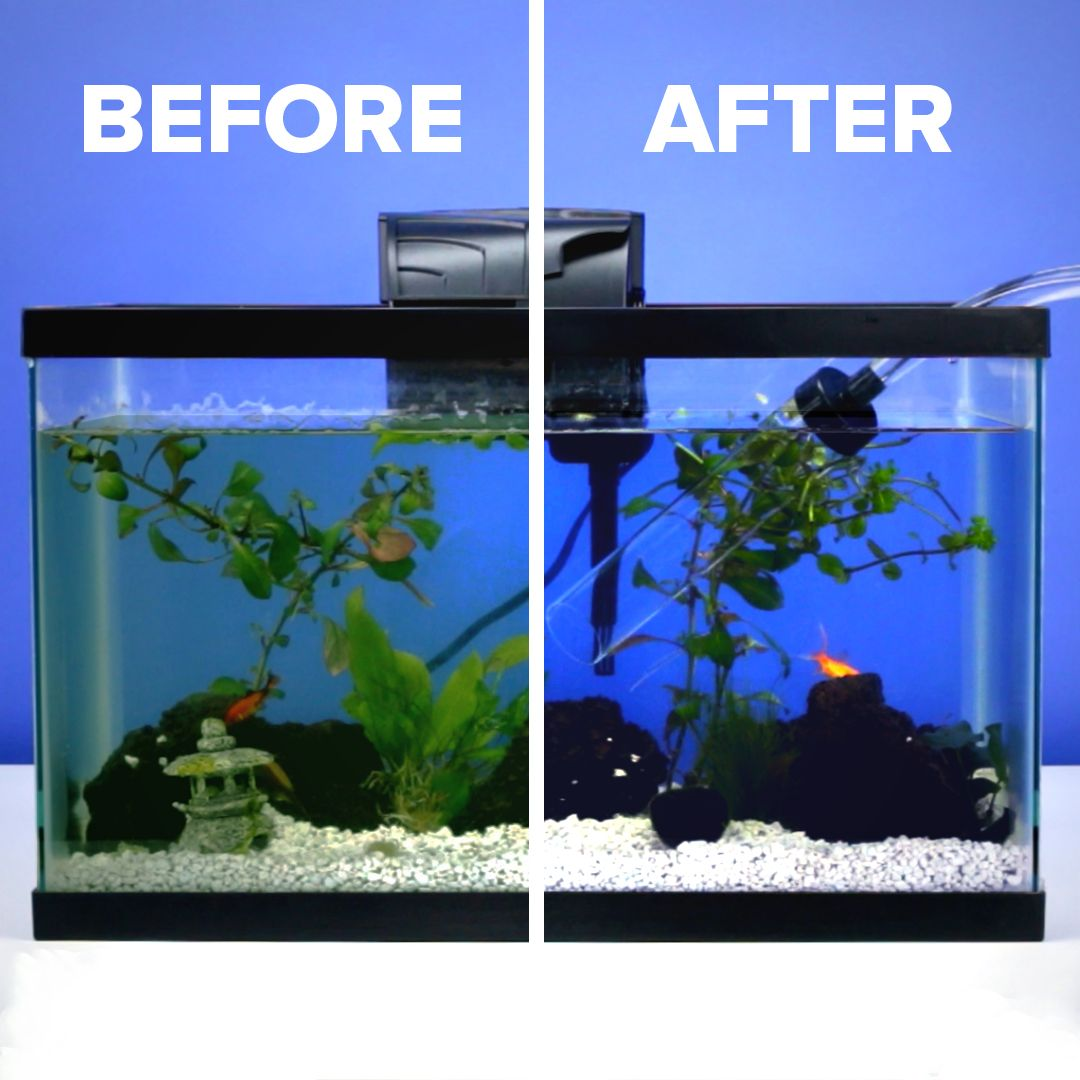Fish Tank Cleaning Made Easy Video Fish Tank Cleaning Cool Fish Tanks Aquarium Fish Tank