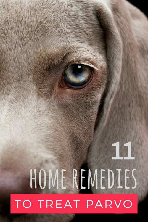 11 Home Remedies to Treat Parvo in Dogs and Puppies