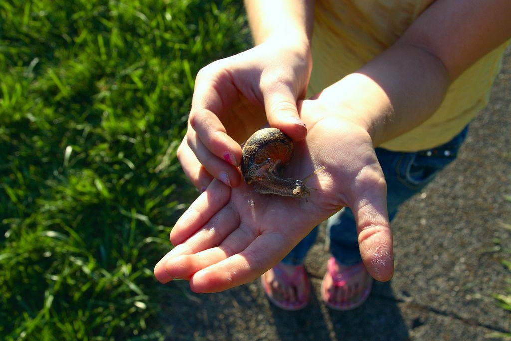 Get rid of snails slakken