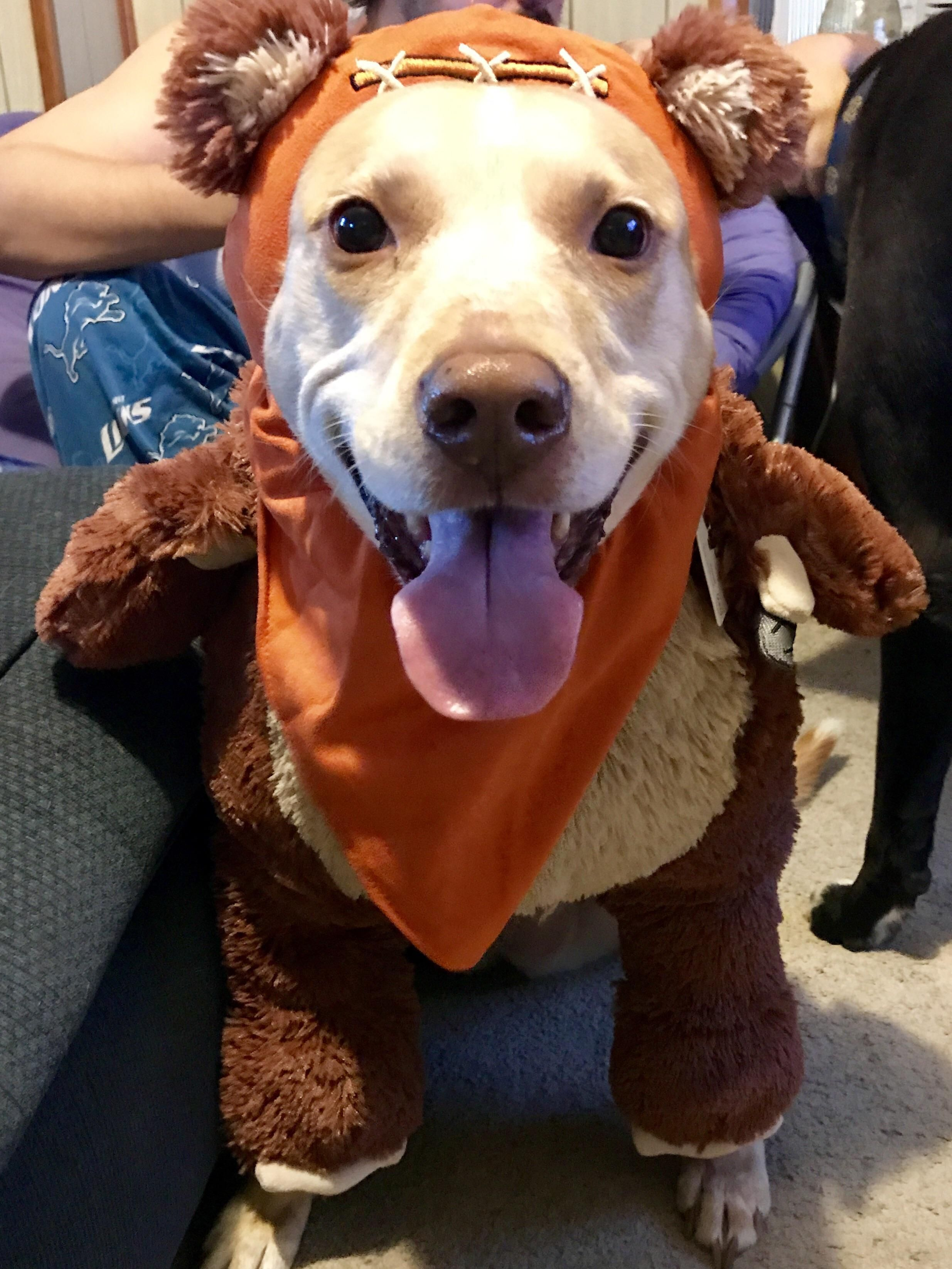 i think my girl likes her ewok costume http ift tt 2wni8ep we