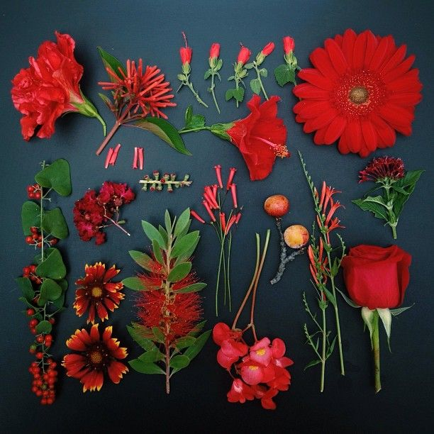 FOUR //the garden collection - Emily Blincoe
