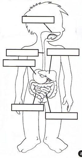 sistema digestivo | educação | Pinterest | Körper, Schule und ...