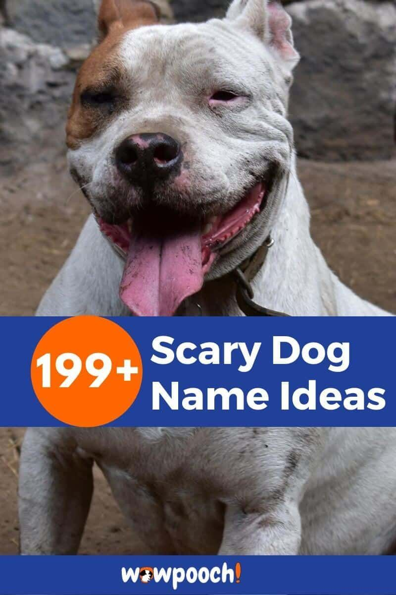 199+ Scary Dog Name Ideas WowPooch in 2020 Scary dogs