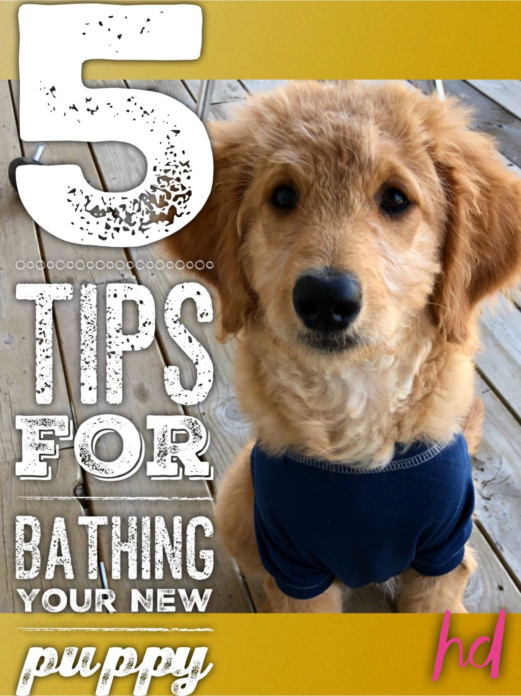 How I Settled My Puppy Down For Bath Hereforddoodles Puppies