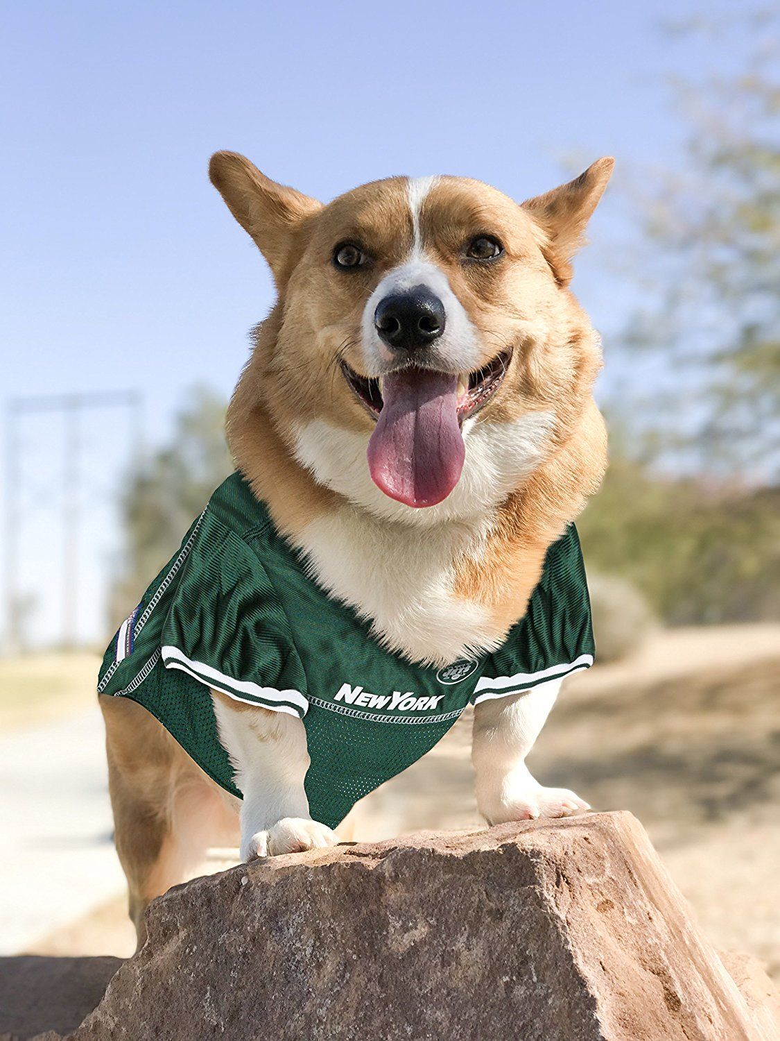 6edb9daf4e3 Official NFL New York Jets Football Jersey for your Dog. They come in all  sizes! So cute! www.dogfootballjersey.com