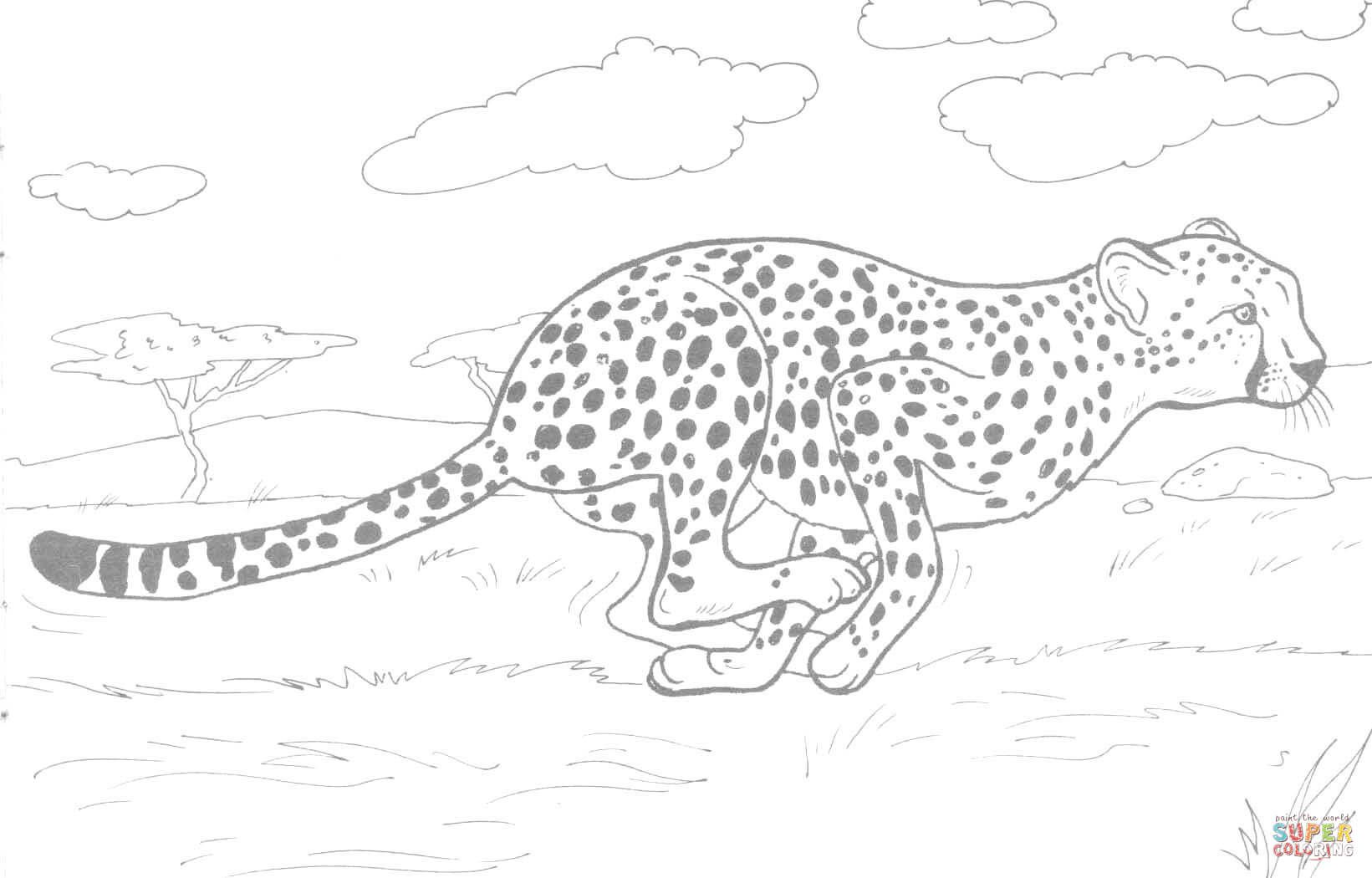 Cheetah Running Coloring Page Free Printable Coloring Pages
