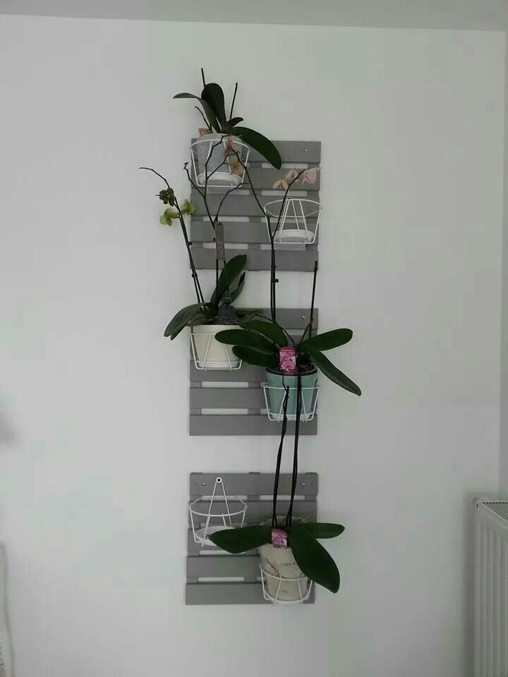 Support mural pour orchid es orchidee e piante - Support mural plantes ...