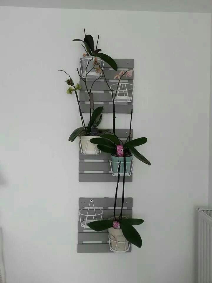 support mural pour orchid es plantes et jardin. Black Bedroom Furniture Sets. Home Design Ideas