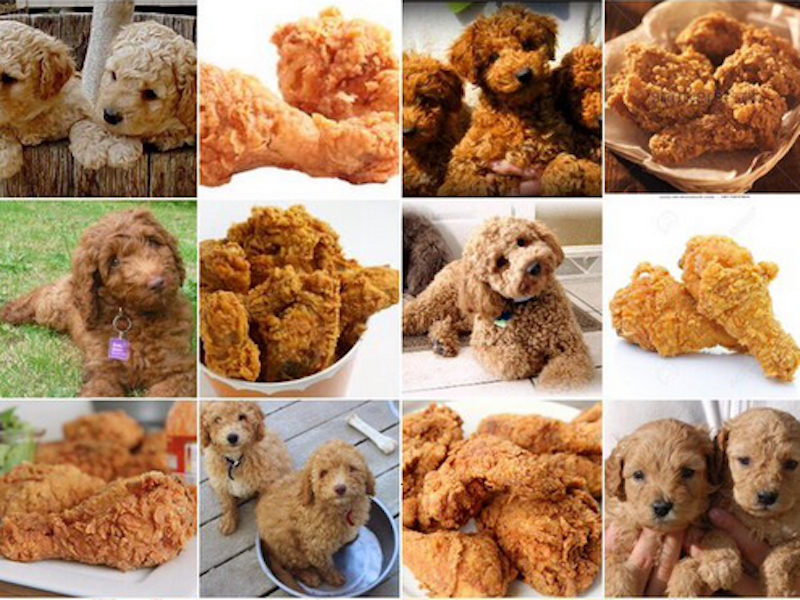 What Breed Of Dog Looks Like Fried Chicken