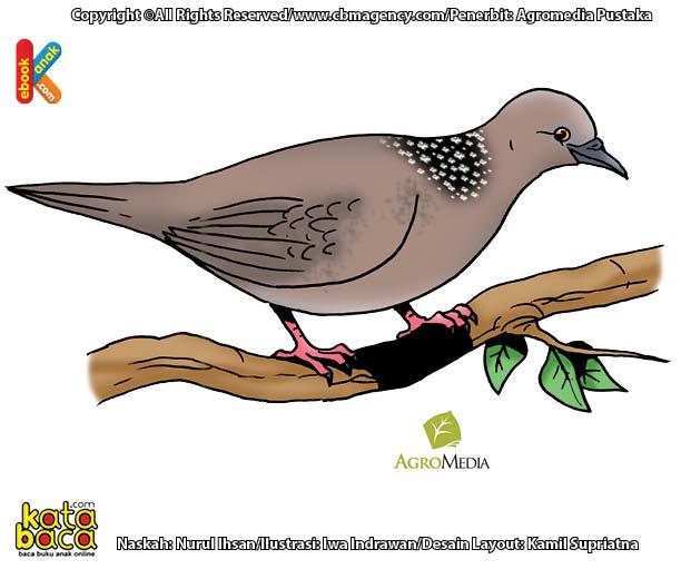 Inilah Burung Bertelur Tercepat Hanya Perlu 9 Detik Untuk Bertelur Di 2021 Burung Binatang Ilustrator