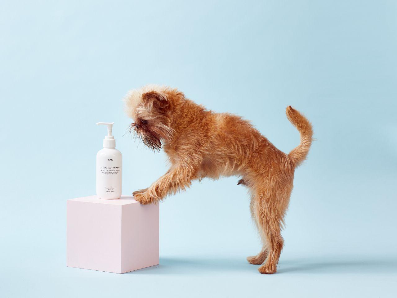 All Natural Vegan Dog Shampoo From Mr Paw In 2020 Vegan Dog Dog Shampoo Dogs