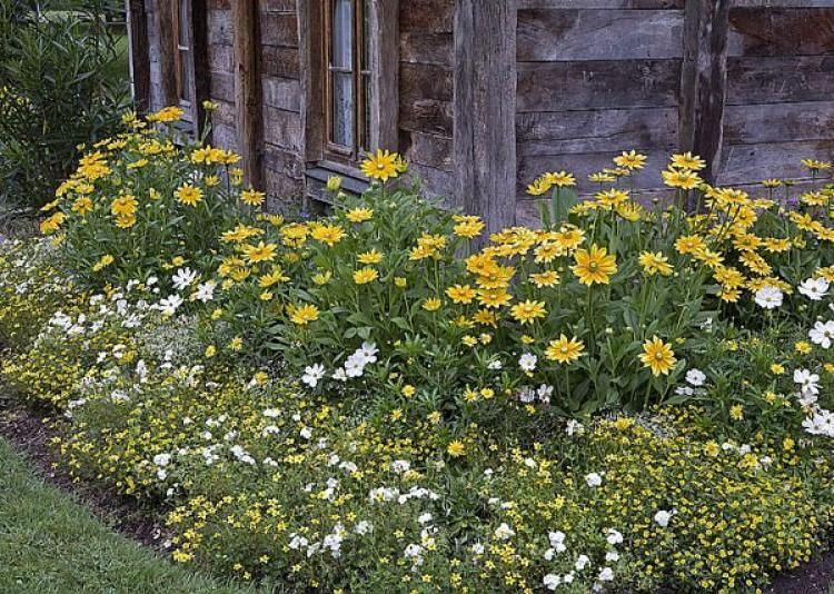 Choisir des plantes pour massifs inratables toiles cosmos et articles for Choisir plantes jardin