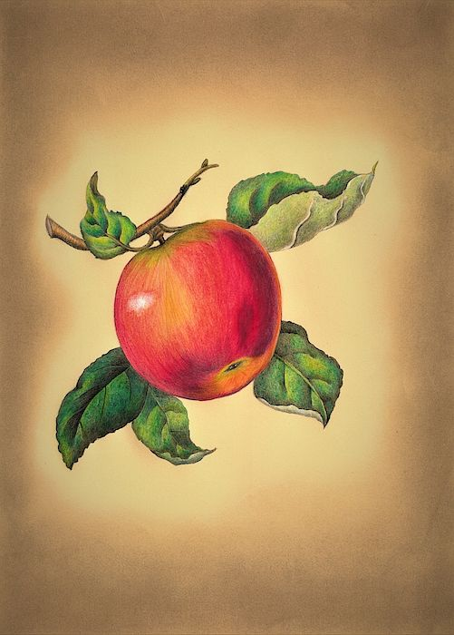 Red Apple in 2020 Colorful drawings, Red apple, True art
