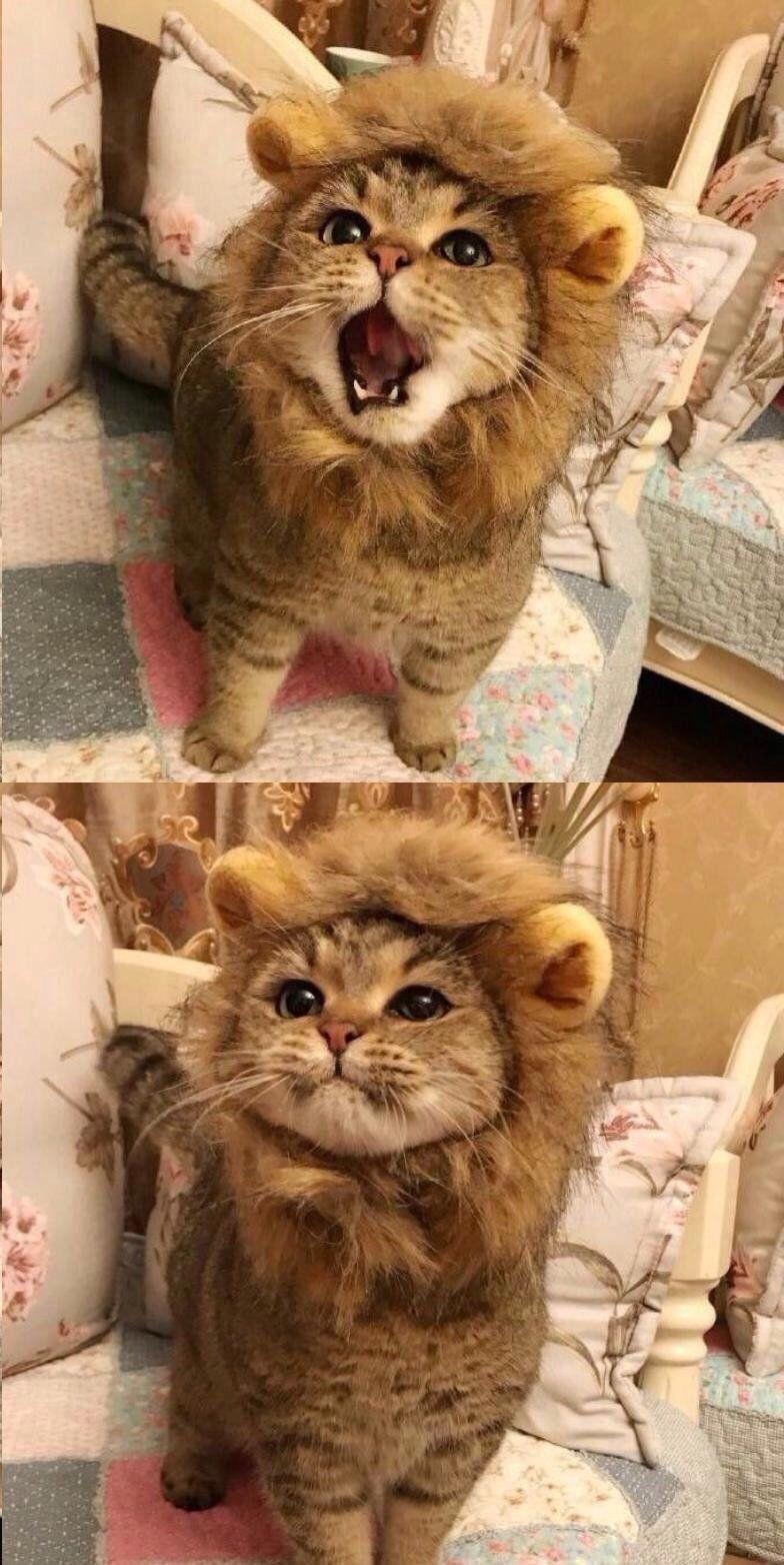 Say Hi To Simba Cute Baby Animals Cute Animals Lion Cat