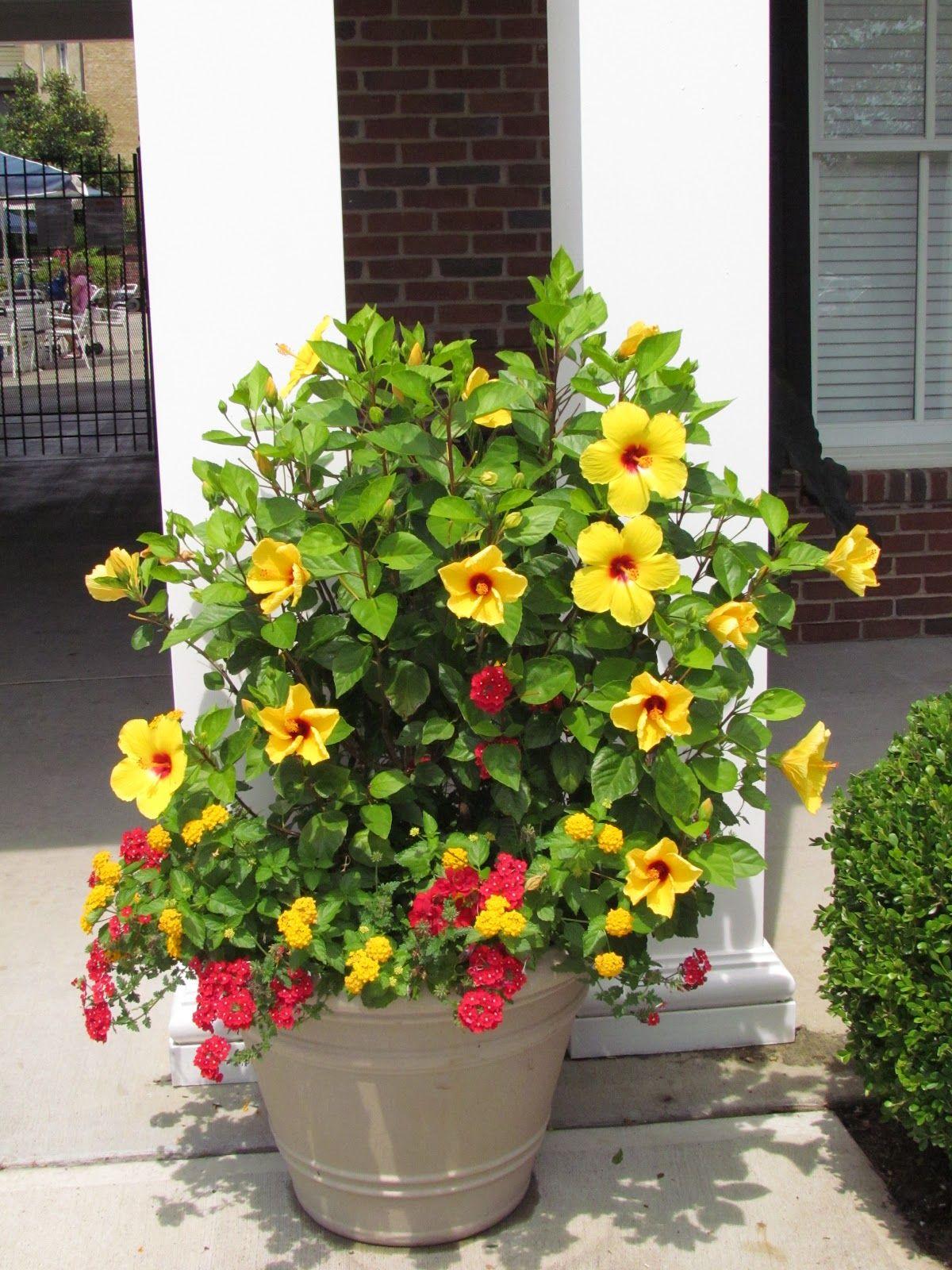 Front porch container gardening ideas - Find This Pin And More On Garden Container Gardening