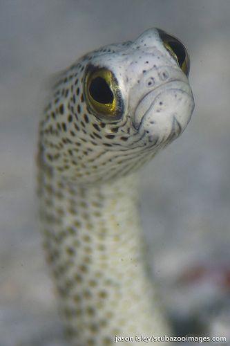 Garden eel (105, 1.5x & 2x) | Upper body, Gardens and Creatures