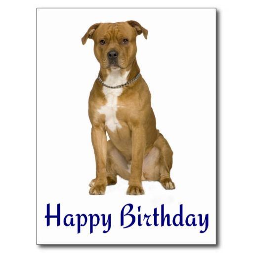 Birthday American Staffordshire Terrier Post Card Zazzle Com