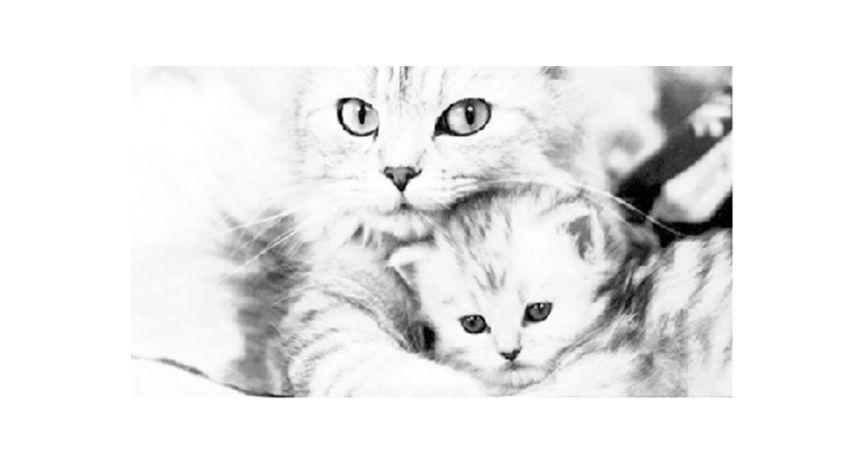 Kitten Stages Love pet, Pet magazine, Kittens