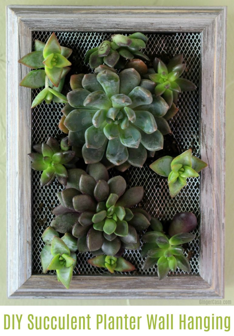 This Gorgeous Succulent Planter Wall Hanging Is Fun To Make And Is Beautiful To Look At Garde Succulent Wall Hanging Succulent Wall Planter Diy Wall Planter