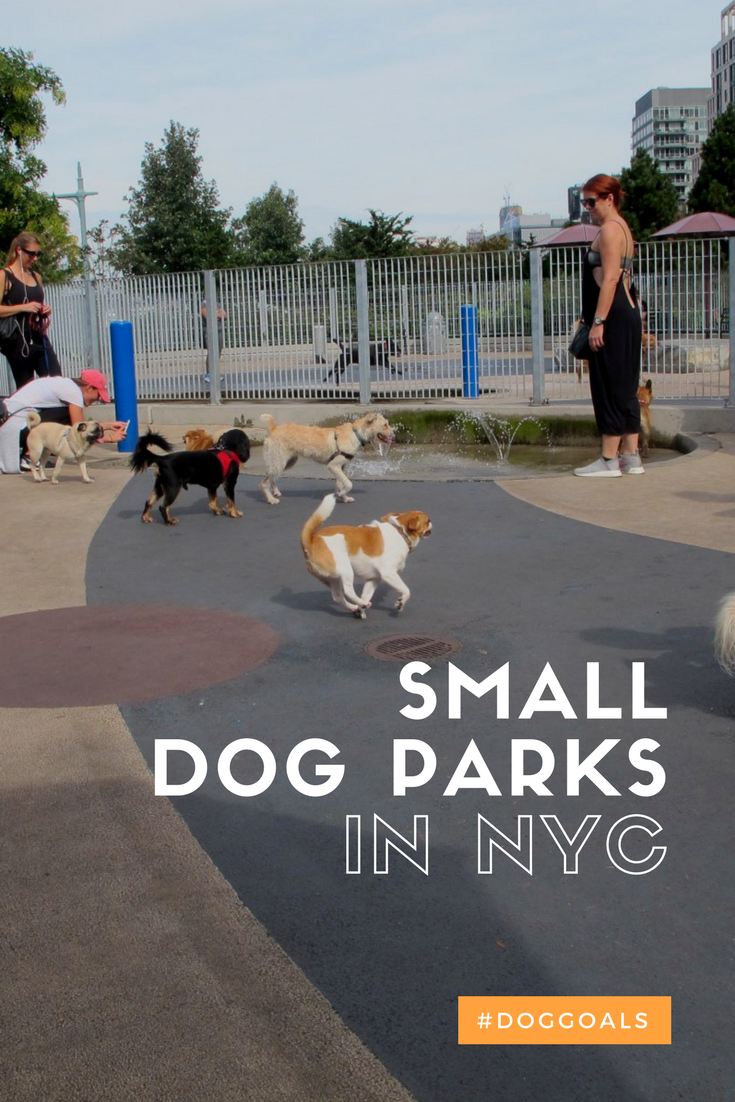 A Complete List Of Small Dog Parks In Nyc Dog Park List Of Small Dogs Small Dogs