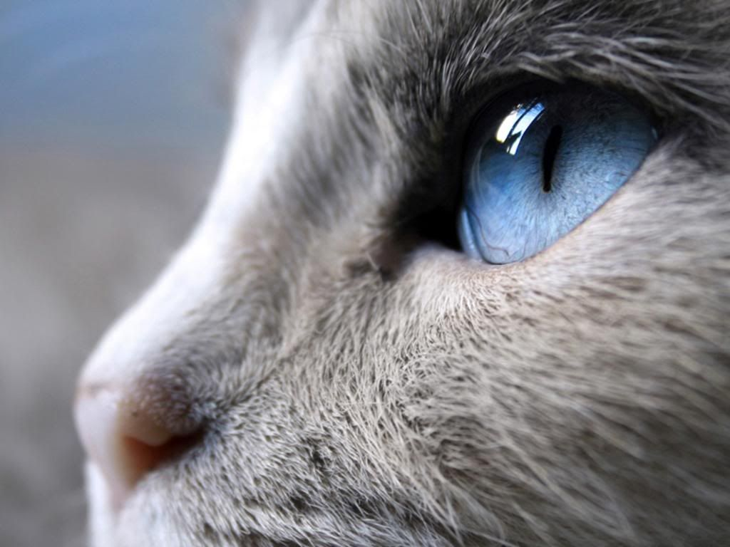 see the reflection of the other cat in his eye