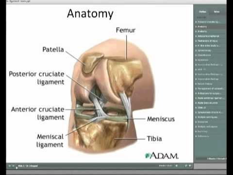 Posterior Cruciate Ligament Injuries of the Knee.   The life of a ...
