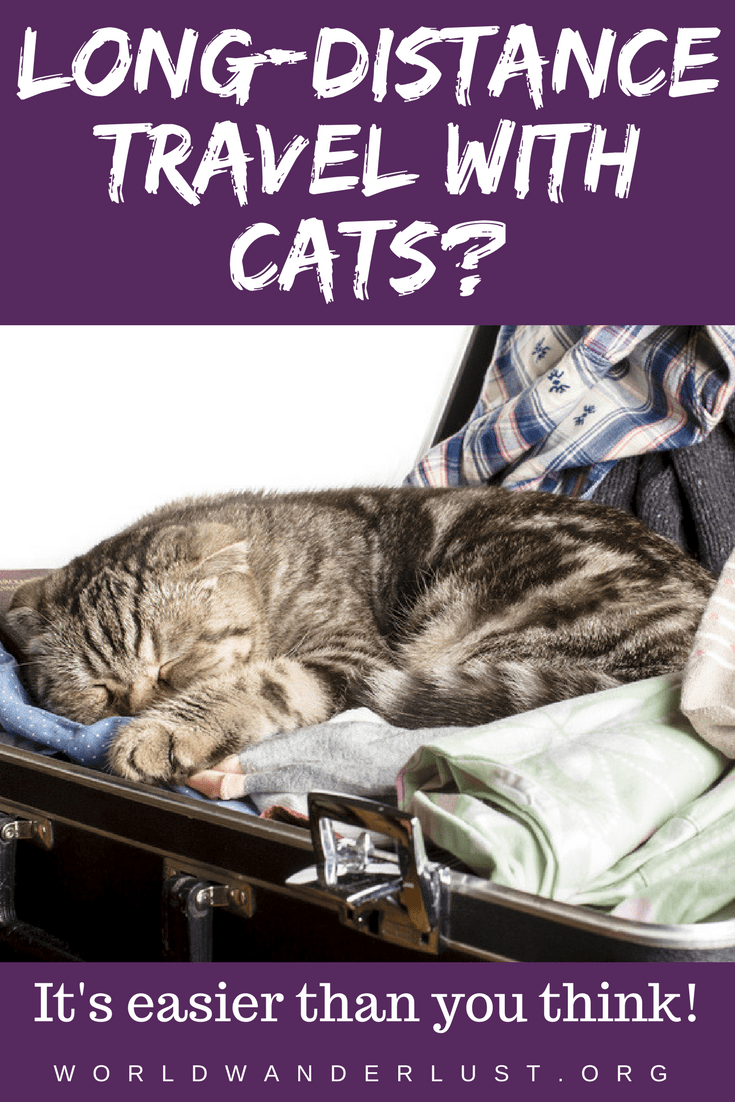 LongDistance Travel with Cats? It's Easier Than You Think