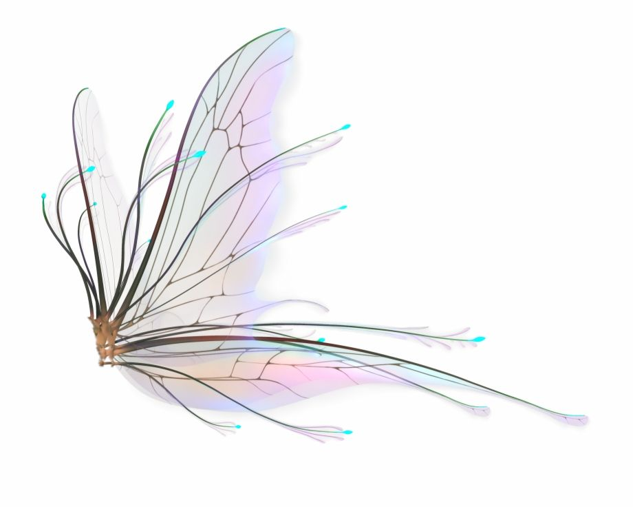 Fairy Wings Png Hd Transparent Fairy Wings Png Is A Free Transparent Png Image Search And Find More On Vippng Fairy Wings Drawing Wings Png Fairy Wings