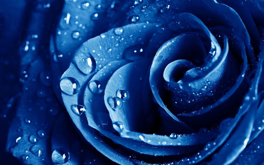 Fonds D Ecran Fleurs Bleues Maximumwallhd Fleurs Bleues Papier Peint A Fleurs Fond D Ecran Colore
